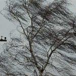 «Разрушаются линии электропередач, падают деревья». Когда Минск всерьез займется адаптацией к изменениям климата?