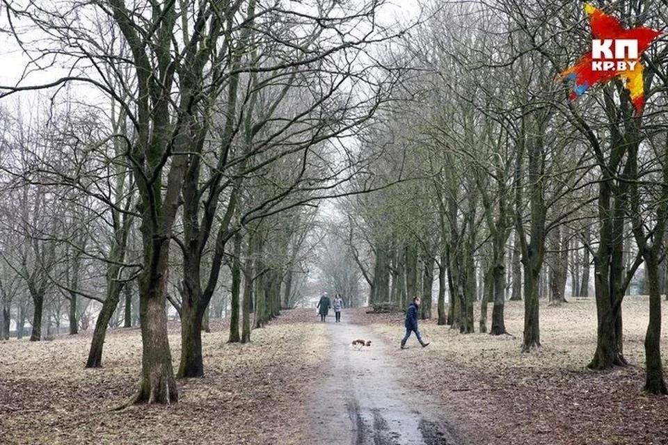 «В Минске такой активности очень мало»: как белорусы строят детские площадки, защищают скверы и благоустраивают парки