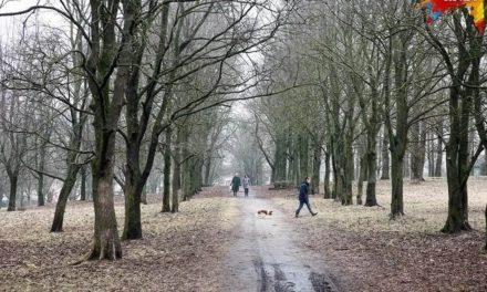 В Минске такой активности очень мало»: как белорусы строят детские площадки, защищают скверы и благоустраивают парки